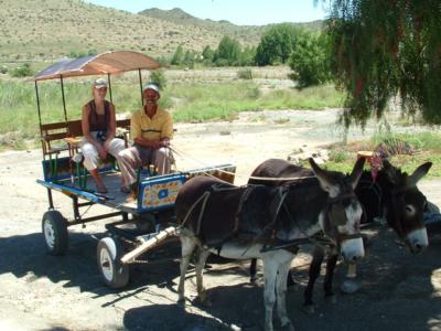 Donkey cart rides Nieu Bethesda