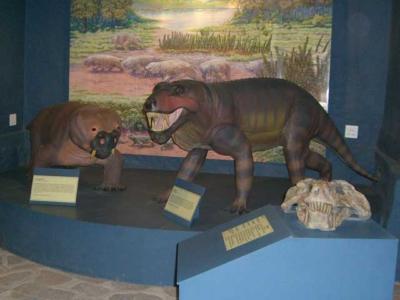 Fossil Centre Nieu Bethesda